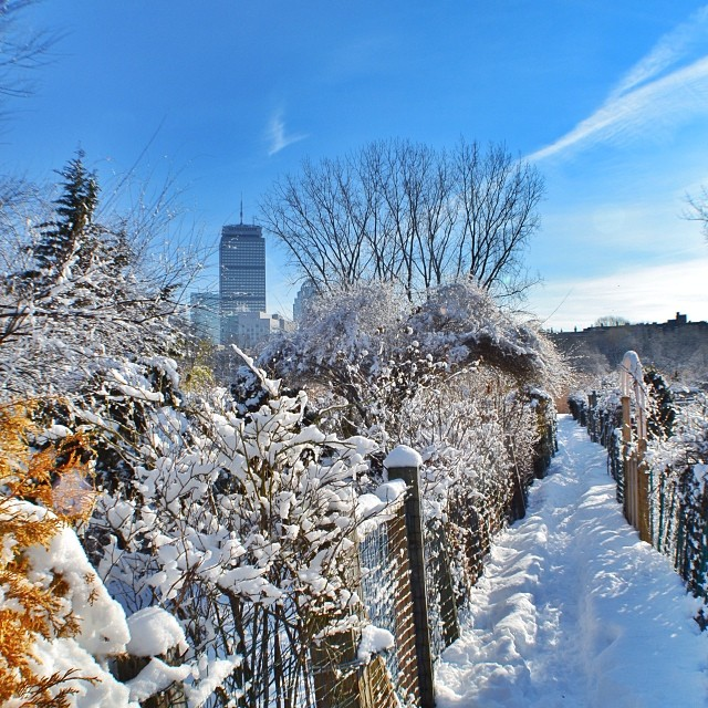 View from the Fenway Victory Gardens by @gmeyers01
