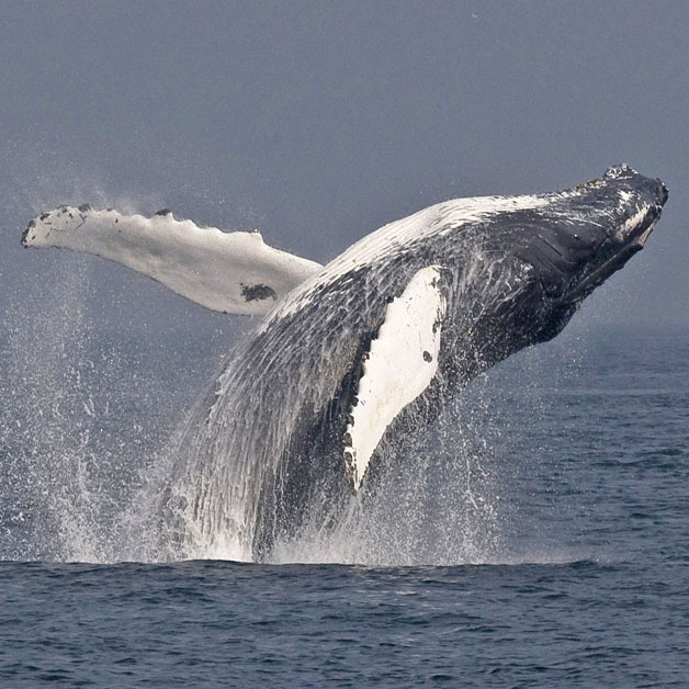 7 Seas Whale Watch