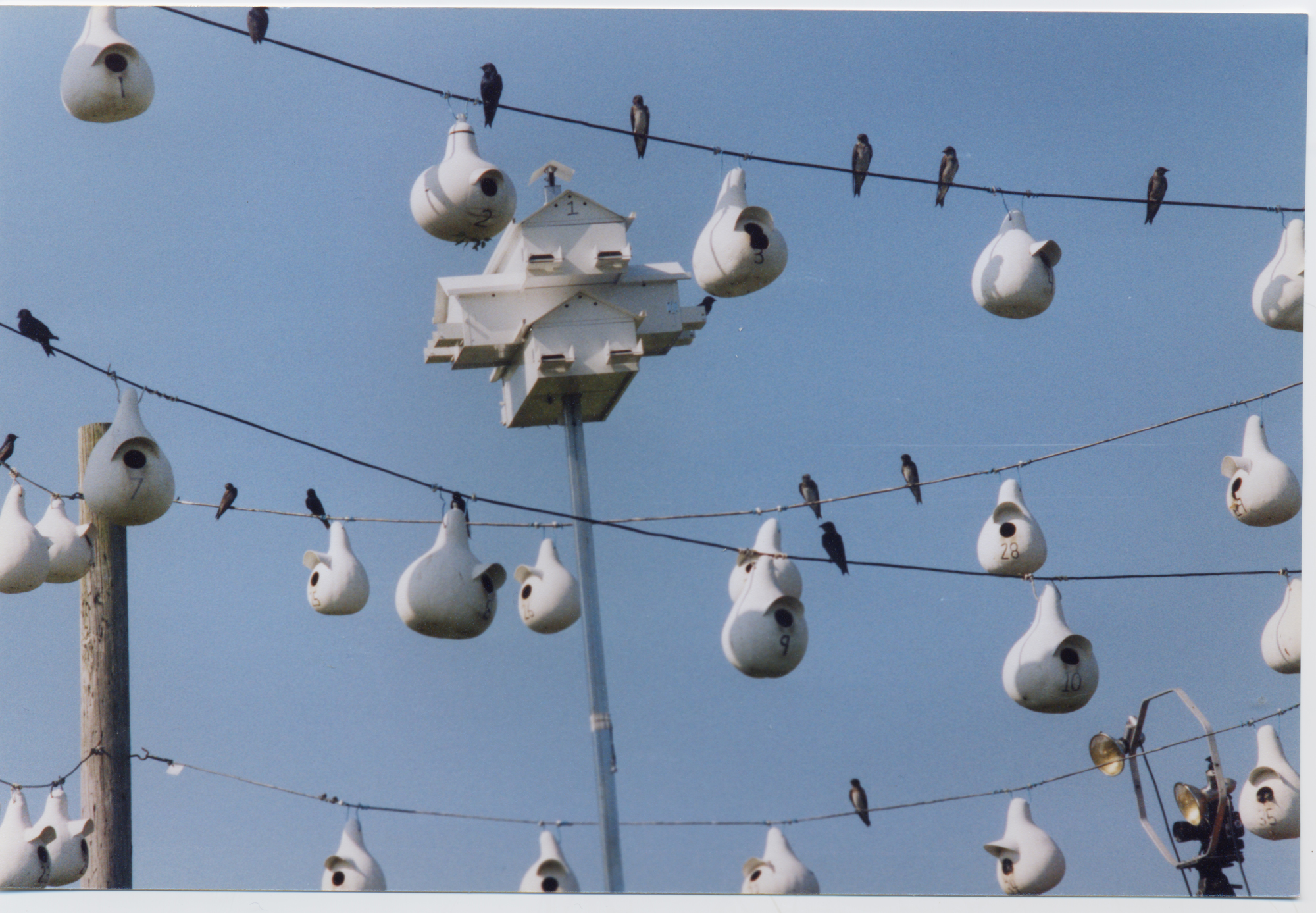 brids on a wire