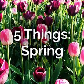 5thingsspring_story